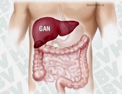 gan và chức năng của gan