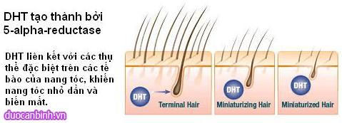 cơ chế rụng tóc