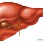 Probiotics có tác dụng ngăn ngừa biến chứng của bệnh gan