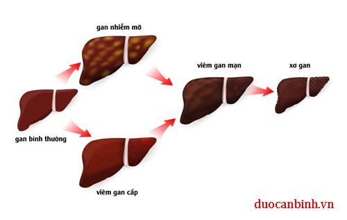 quá trình gây xơ gan do rượu