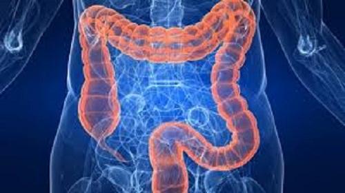 priobitic đường ruột