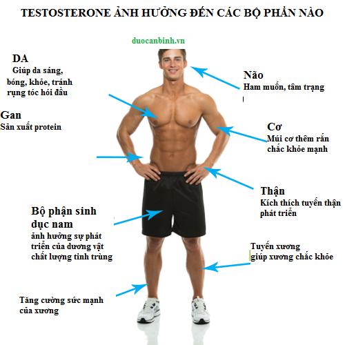 tac-hai-suy-giam-testosterone_3